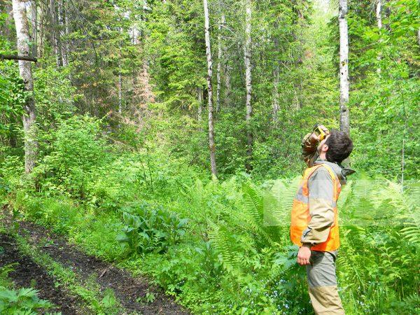 Лесоустроительные работы